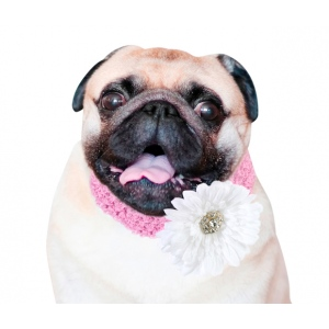 Lillian Rose Flower Dog Collar